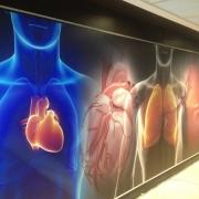 printed-hospital-wall-graphics